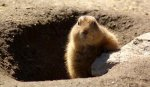 Groundhog-Day-shadow.jpg